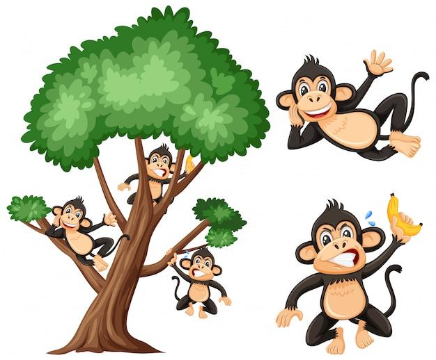 Grote boom en gekke apen