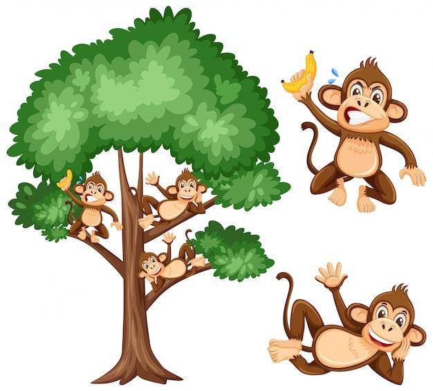 Grote boom en ondeugende apen