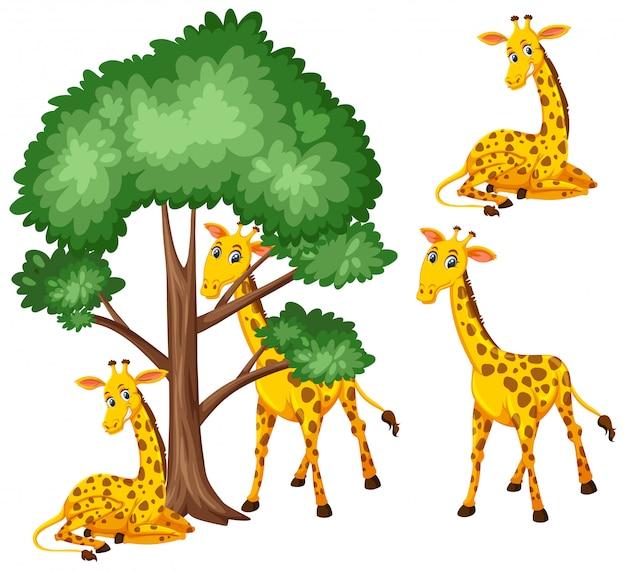 Grote boom en schattige giraffen op witte achtergrond