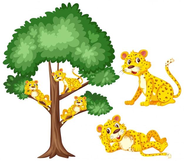 Grote boom en schattige tijgers