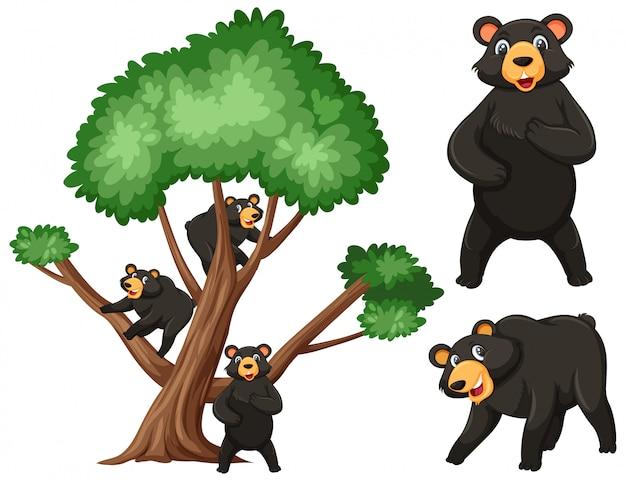 Grote boom en zwarte beren