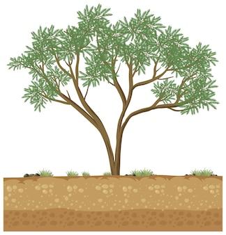 Grote boom groeit op vaste grond