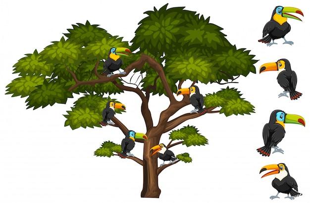 Grote boom met veel toekanvogels op de tak