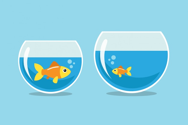 Grote en kleine goudvissen kijken elkaar aan