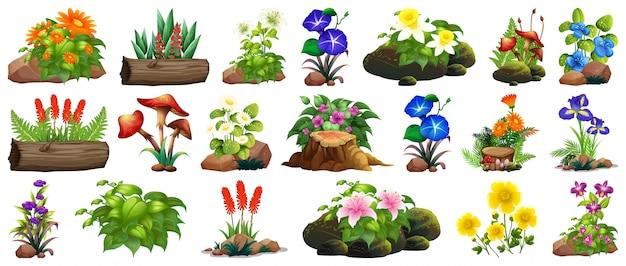 Grote et van kleurrijke bloemen op rotsen en hout