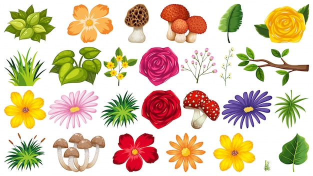 Grote groep geïsoleerde bloemen