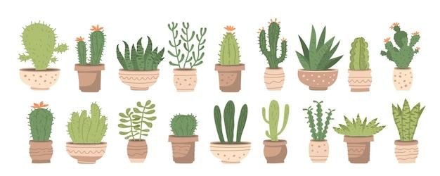 Grote kamerplanten set met verschillende schattige cactussen en vetplanten in potten