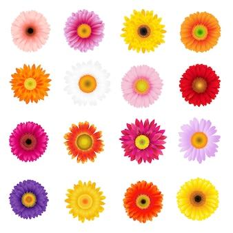 Grote kleurrijke gerbers set