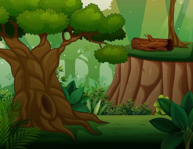 Grote oude boom in het midden van het bos