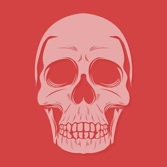 Grote tanden schedel