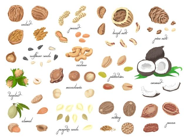 Grote verzameling van geïsoleerde gekleurde noten en zaden