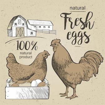 Haan chiken en aggs. vectorillustratie in vintage stijl.