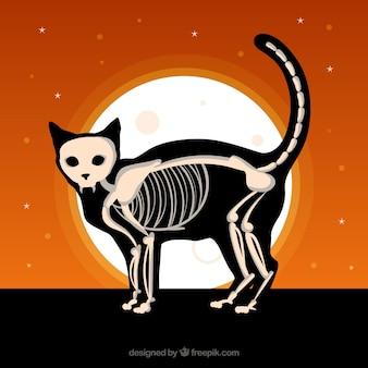 Halloween achtergrond met kat en skelet