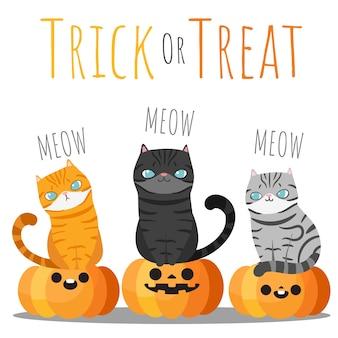 Halloween drie katten die op halloween-pompoenen zitten.