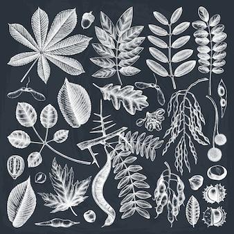 Hand geschetst herfstbladeren collectie op schoolbord. elegante en trendy botanische elementen. hand getrokken herfstbladeren, bessen, zaden schetsen.