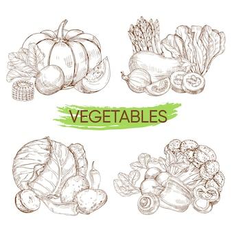 Hand geschetst vector groenten geïsoleerd op wit