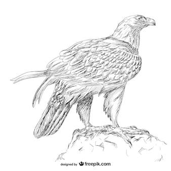 Hand getekend adelaar vector