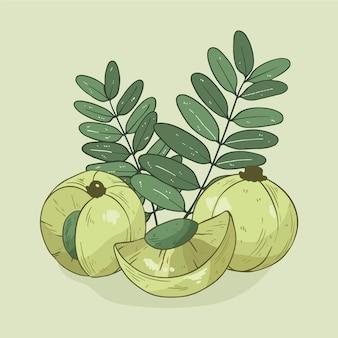 Hand getekend amla fruit geïllustreerd