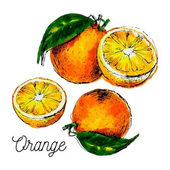 Hand getekend aquarel op witte achtergrond. illustratie van fruit oranje