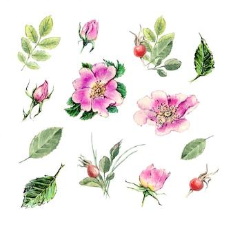 Hand getekend aquarel rozenbottels op witte achtergrond.