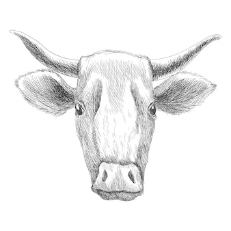 Hand getekend dier. vee op de boerderij. vintage gravure illustratie