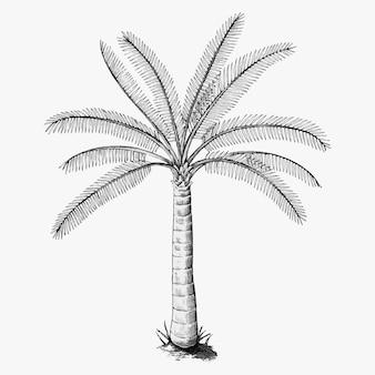 Hand getekend een palmboom