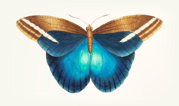 Hand getekend grote occidental vlinder