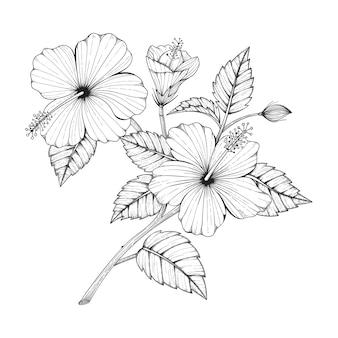 Hand getekend hibiscus bloem tekening illustratie.