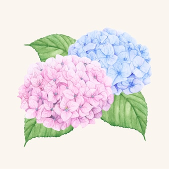 Hand getekend hortensia bloem geïsoleerd