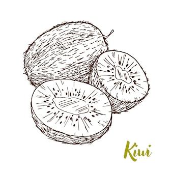 Hand getekend kiwi illustratie