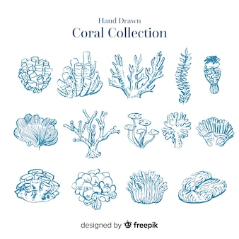 Hand getekend kleurloze koraal collectie
