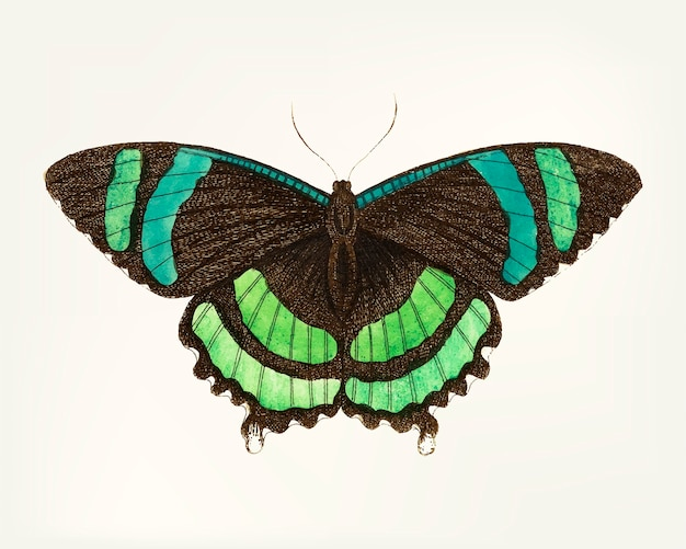 Hand getekend met groen gestreepte vlinder
