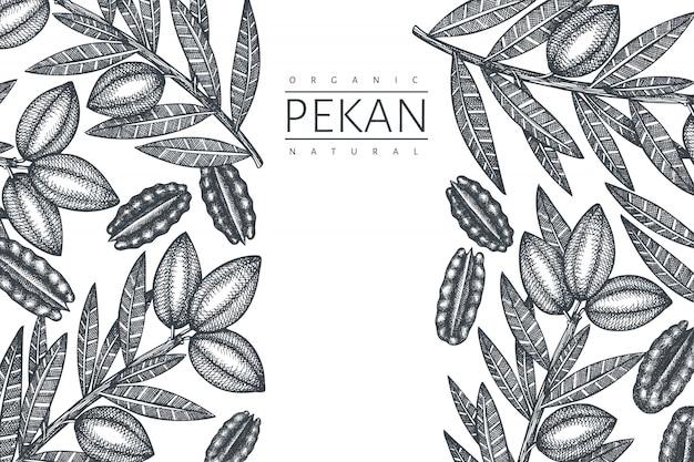 Hand getekend pecannoot tak en pitten ontwerp