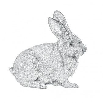 Hand getekend realistisch konijn