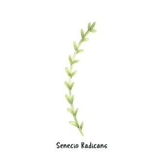 Hand getekend succulent