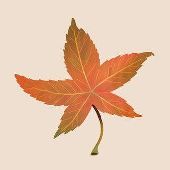 Hand getekend sweetgum element vector herfstblad