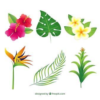 Hand getekend tropische bloem verzameling van zes