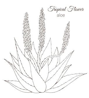Hand getekend tropische bloemen