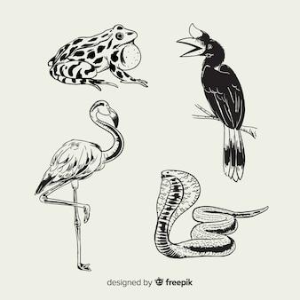 Hand getekend tropische dieren collectie Gratis Vector