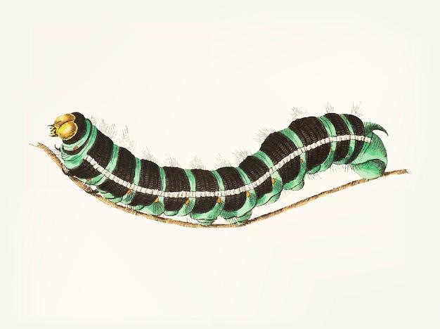Hand getekend van caterpillar