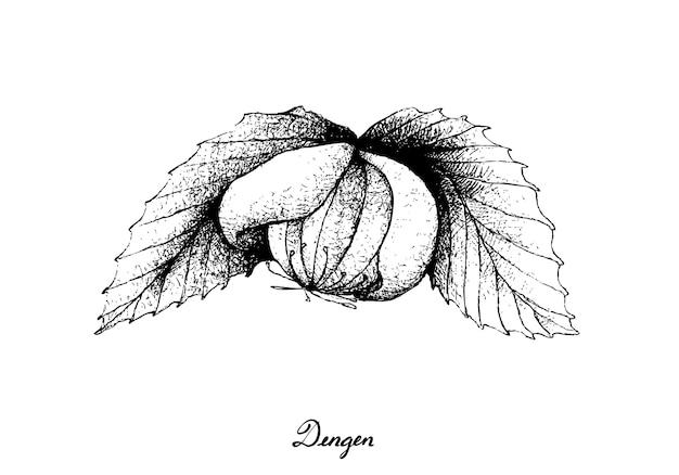 Hand getekend van een frisse dengen fruit