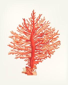 Hand getekend van geveerde gorgonia