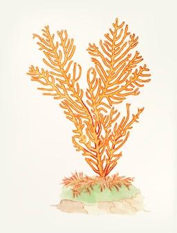 Hand getekend van gorgonian fan koraal
