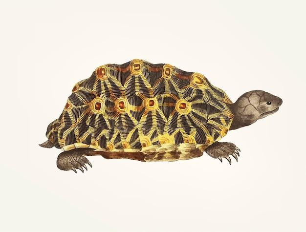Hand getekend van uitgestraalde schildpad