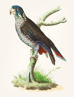 Hand getekend van zwartachtig papegaai