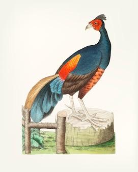 Hand getekend van zwarte fazant