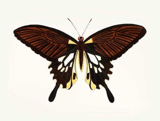 Hand getekend van zwarte vlinder met vleugels met de staart