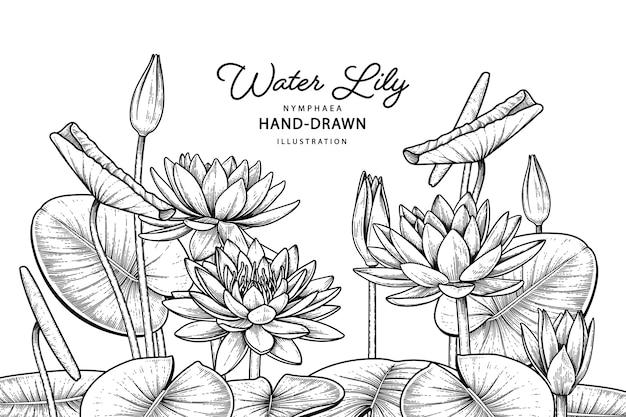 Hand getekend zeer gedetailleerde lijntekeningen waterlelie bloem decoratieve set geïsoleerd op een witte achtergrond