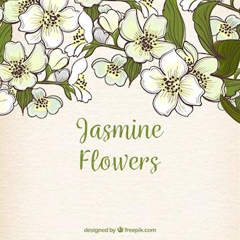 Hand getekende achtergrond met jasmijn bloemen