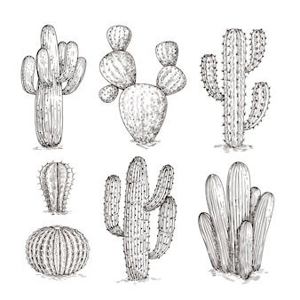 Hand getekende cactus
